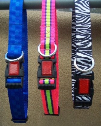 Designer Webbing Dog Collar